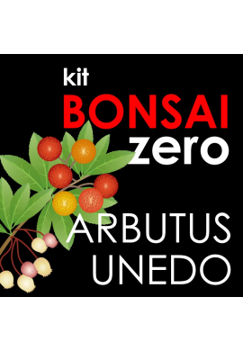 Kit Bonsai Zero Arbutus unedo ( Madroño )