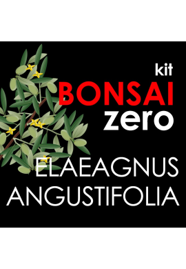 Kit Bonsai Zero Eleagnus angustifolia