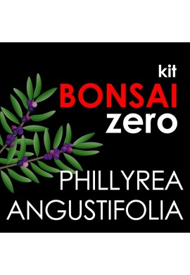 Kit Bonsai Zero Phillyrea Angustifolia