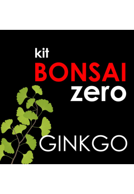 Kit Bonsai Zero Gingko