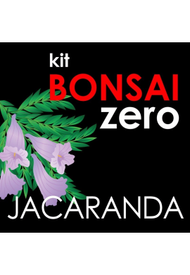 Kit Bonsai Zero Jacaranda