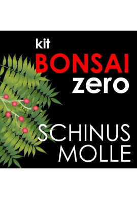 Kit Bonsai Zero Schinus Molle
