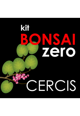 Kit Bonsai Zero Cercis Siliquastrum