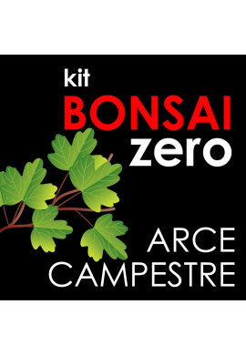 Kit Bonsai Zero Arce Campestre