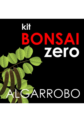 Kit Bonsai Zero  Algarrobo Ceratonia Siliqua