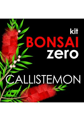 Bonsai Zero Callistemon