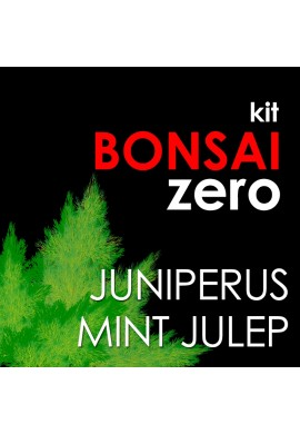 Bonsai Zero Juniperus Mint Julep